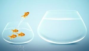 fish-jumps-out-of-bowl-3-300x171.jpg